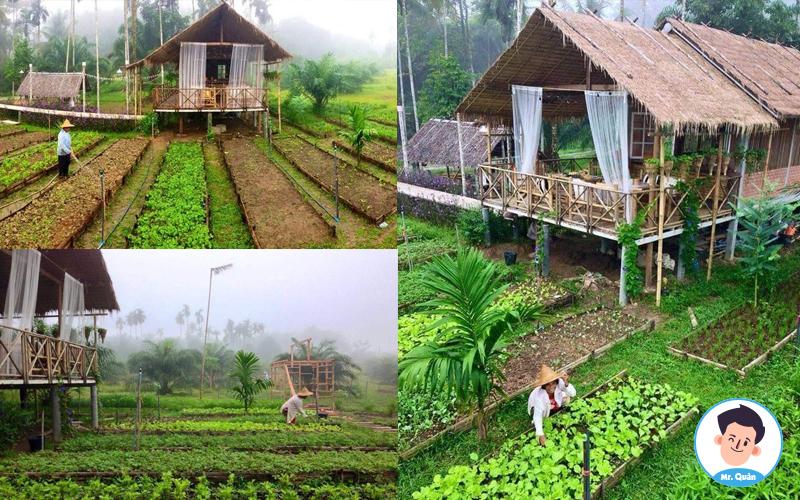 Những ngôi nhà có vườn rau đẹp tại Thái Lan