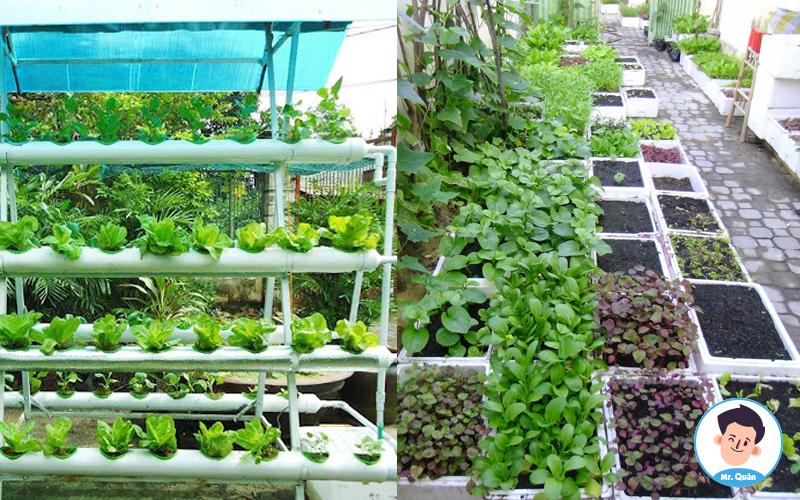 Lựa chọn vị trí thiết kế vườn rau