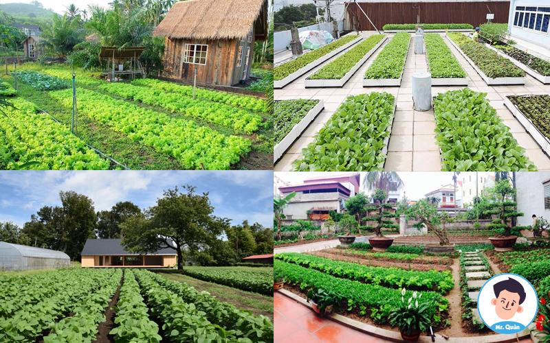 Nhà trồng rau theo luống