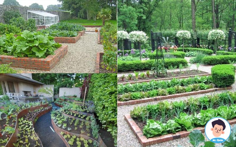 Vườn rau dọc đường vào nhà
